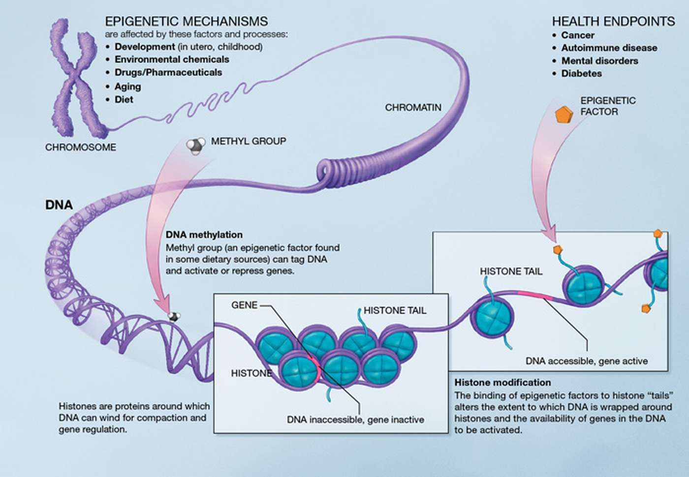 epigenetic-mechanisms