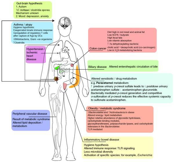 заболевания, связанные с метаболизмом кишечной микрофлоры