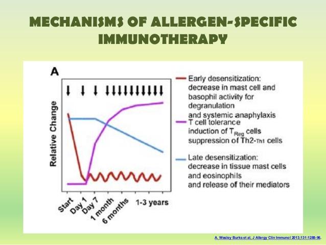 Механизм иммунотерапии аллергии