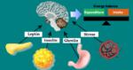 гормоны и похудение