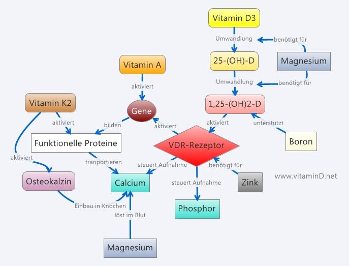 Взаимосвязи витамина D и некоторых других веществ.