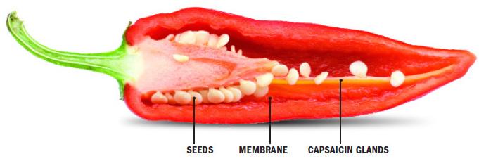 Капсаицин из жгучего перца