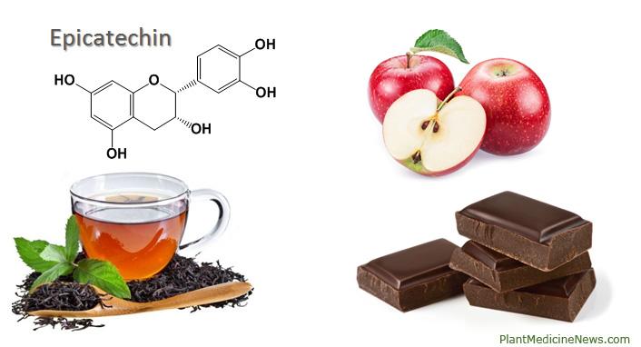 Эпикатехин в продуктах питания