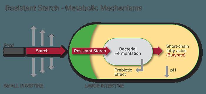 Схема полезного действия резистентного крахмала