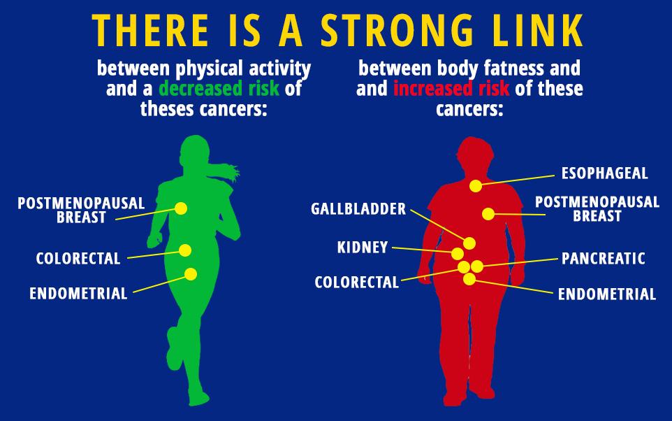 физические упражнения снижают риск развития рака