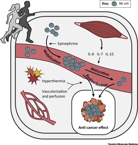Аэробные физические упражнения помогают активировать иммунитет против раковых клеток