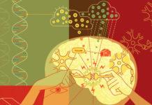 Сила мысли управляет мозгом, клетками и генами