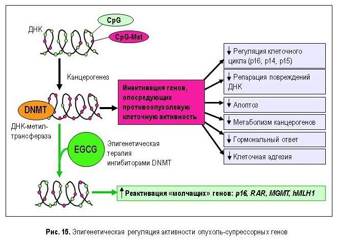 Эпигенетика при лечении рака простаты