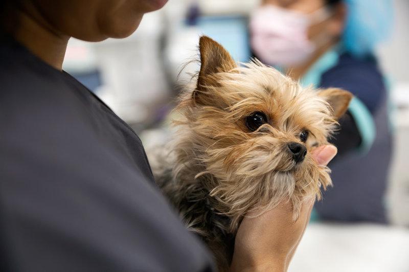 Ветеринары более склонны к самоубийствам