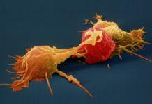 Повышение иммунитета через натуральные киллеры
