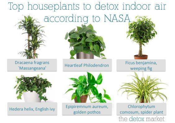 Растения очищающие воздух в доме и помещении