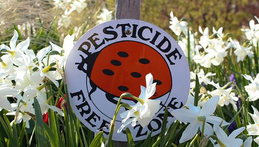 Загрязнение пестицидами и гербицидами огорода или сада
