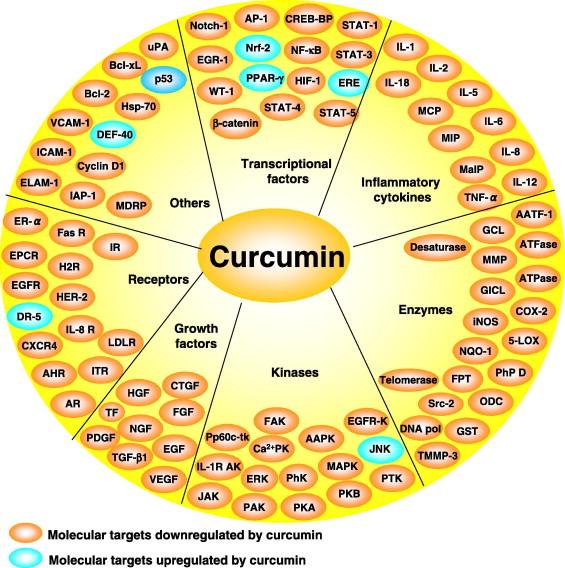 Молекулярные эффекты действия куркумина