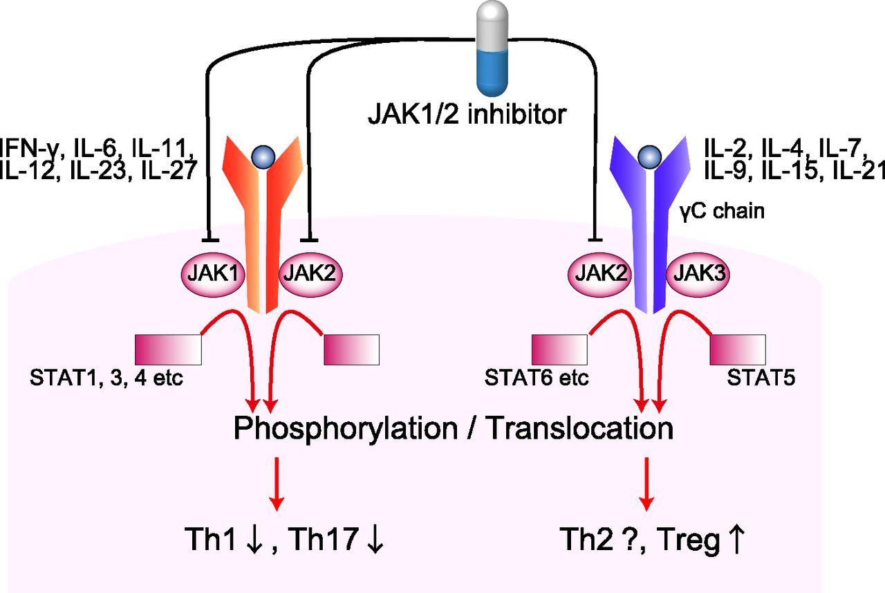 Ингибирование JAK1 снижает воспаление