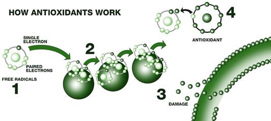 Как работают антиоксиданты