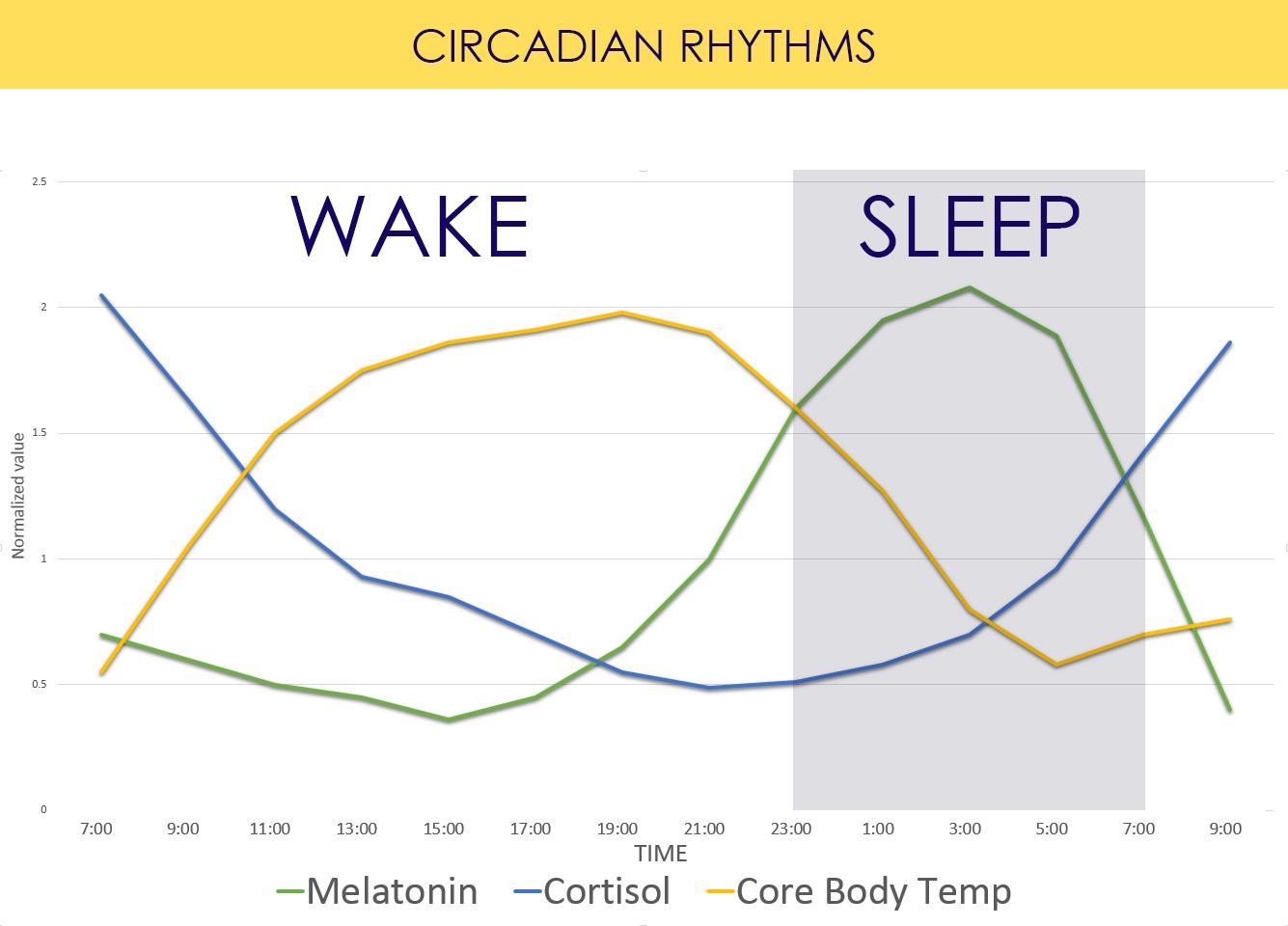 График выработки гормонов кортизола и мелатонина, а также изменение температуры тела в течение суток