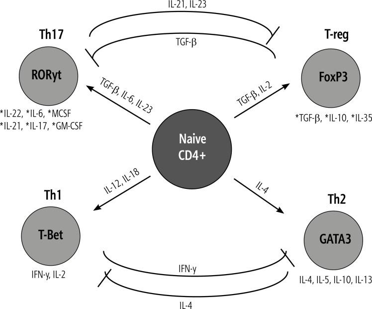 Схема иммунной регуляторной оси