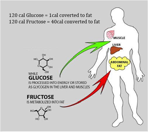 Фруктоза превращается в жир