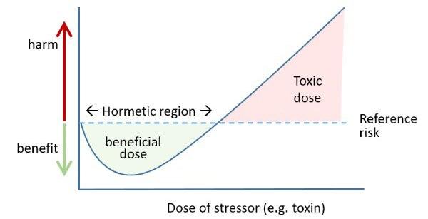 Что такое гормезис