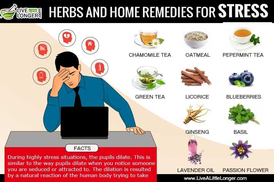 Растения, способные помочь уменьшить стресс