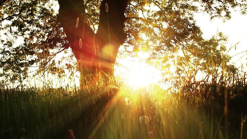 Утренние солнечные лучи