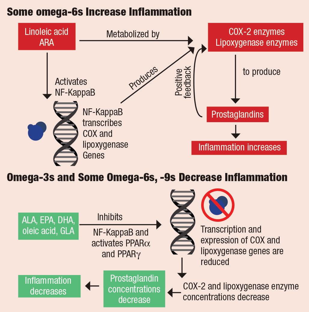 Роль олеиновой кислоты в снижении воспаления