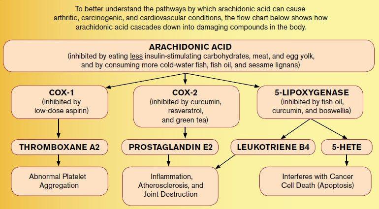 Схема влияния арахидоновой кислоты на риск множества заболеваний