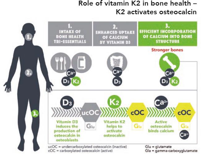 Витамин К2 активирует остеокальцин