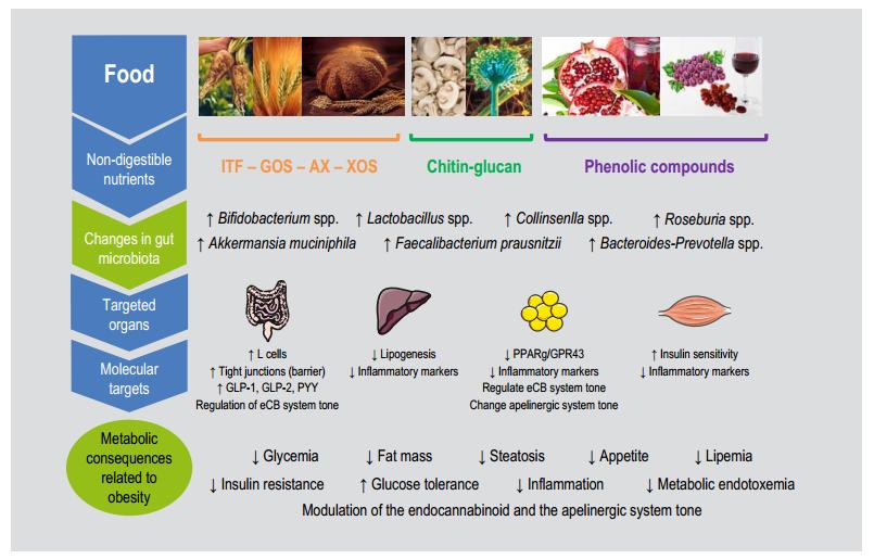 Влияние продуктов питания на микрофлору кишечника