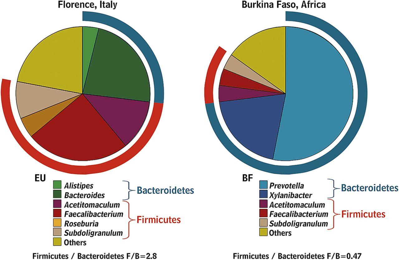 Состав микрофлоры кишечника у жителя Италии и Африки