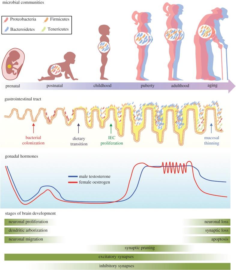 Изменение микрофлоры кишечника у детей и взрослых