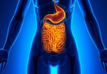Микрофлора кишечника и её влияние на наше здоровье