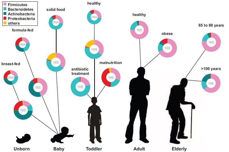 Изменение микрофлоры кишечника с возрастом