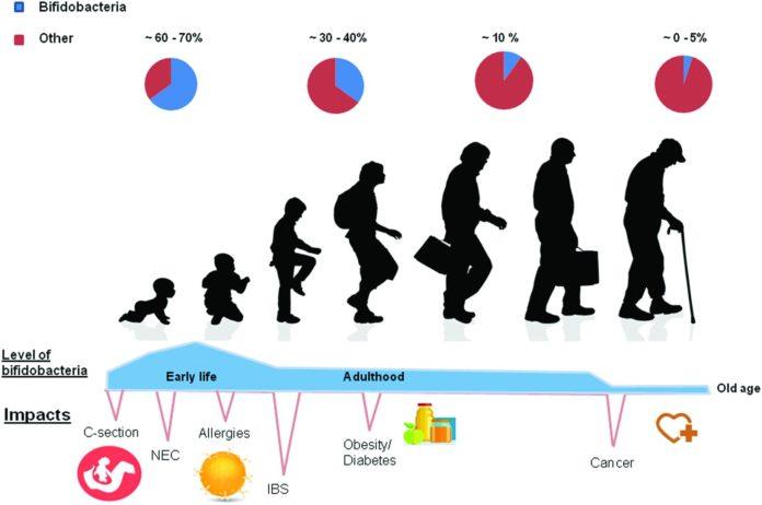 Изменение содержания бифидобактерий в микрофлоре кишечника с возрастом