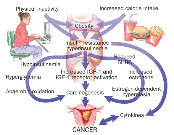 Диабет и рак при росте IGF-1