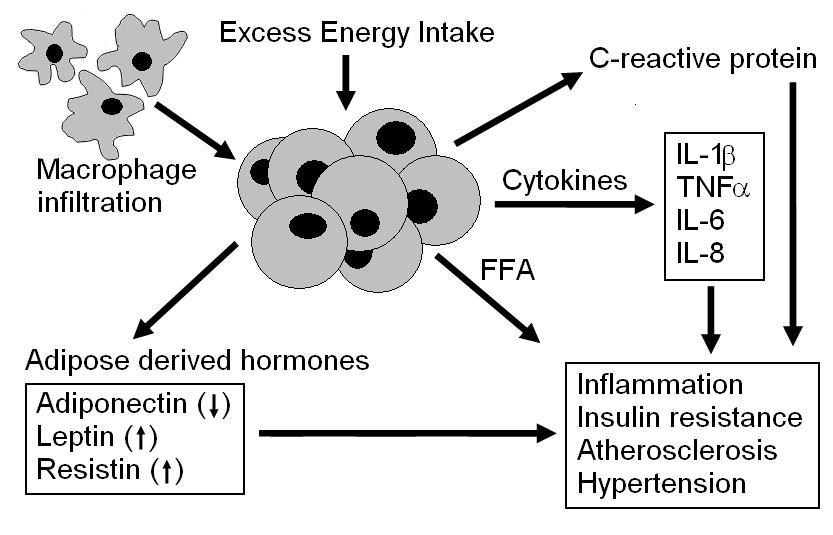 Насыщенные жиры увеличивают С-реактивный белок
