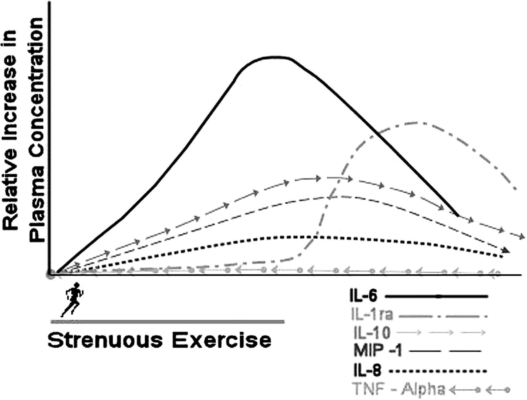 Влияние интенсивной физической нагрузки на выработку и уровень различных цитокинов