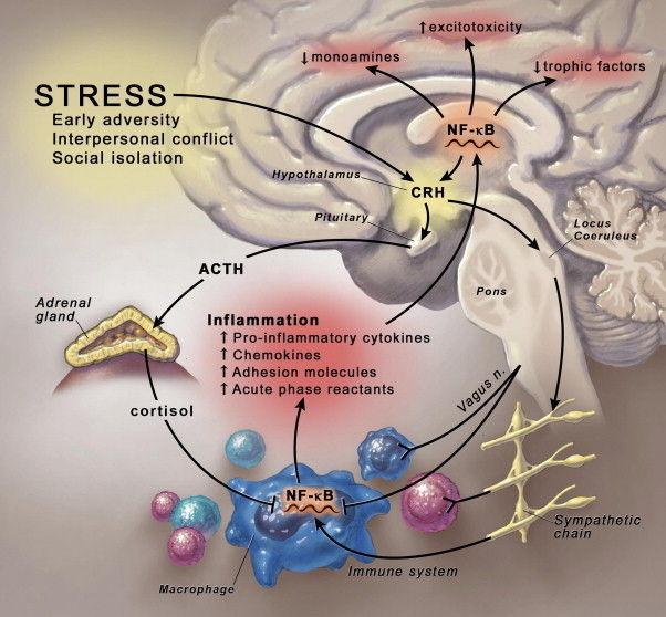 Роль воспаления в развитии депрессии