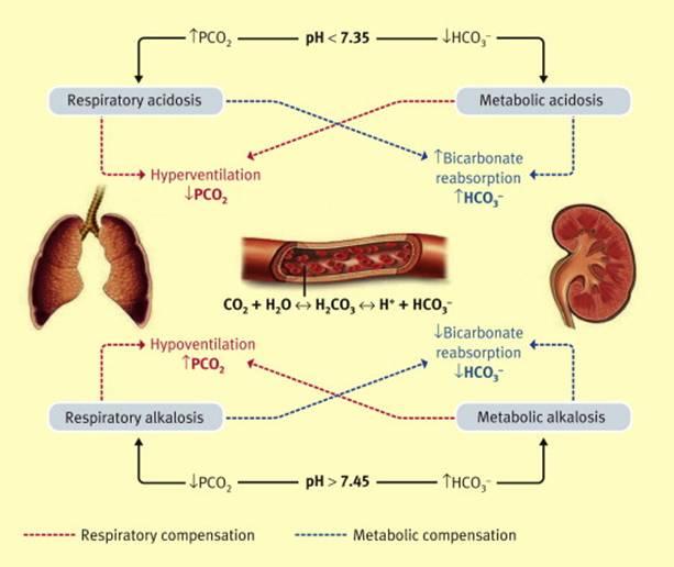 Изменения в организме при разных видах ацидоза
