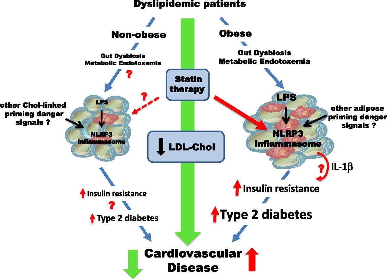 Статины увеличивают риски диабета и инсулиновой резистентности