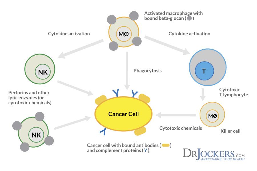 Схема действия бета глюканов против рака