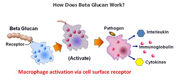 Бета глюканы против инфекции