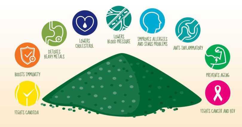 Полезные свойства спирулины при различных заболеваниях