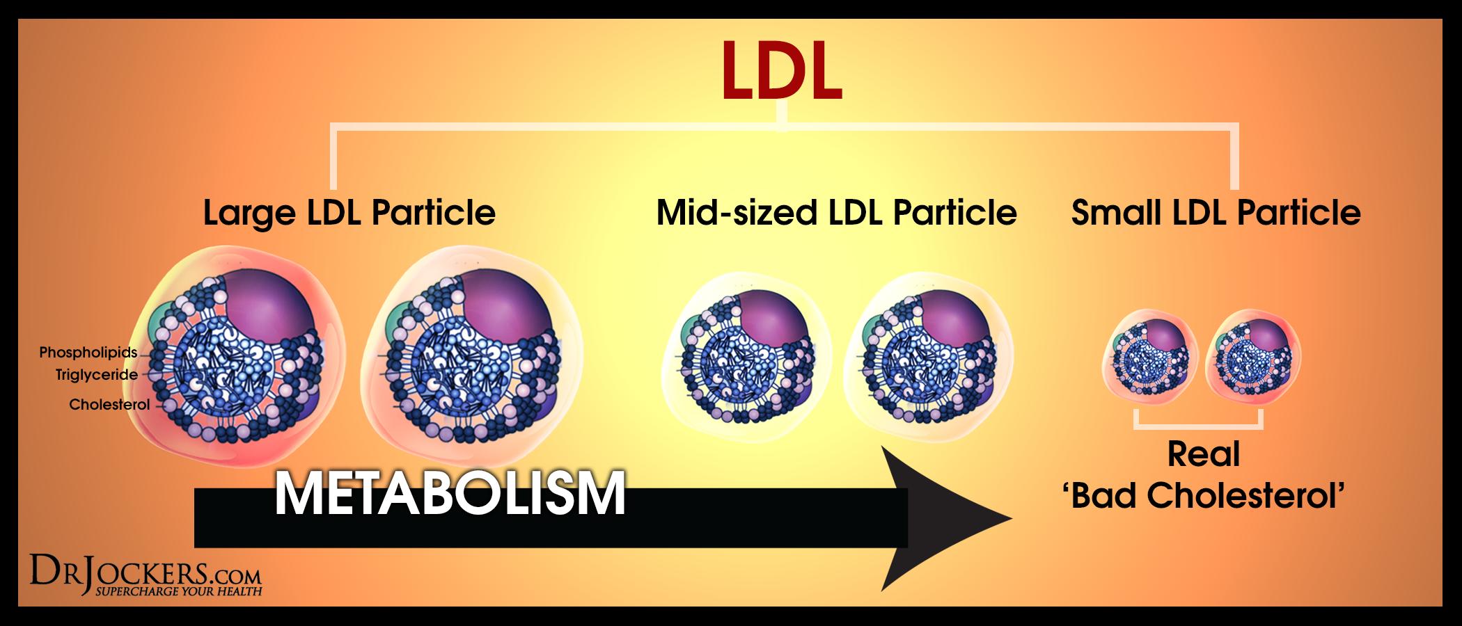 """Вред """"плохого"""" холестерина ЛПНП зависит от размера частиц"""