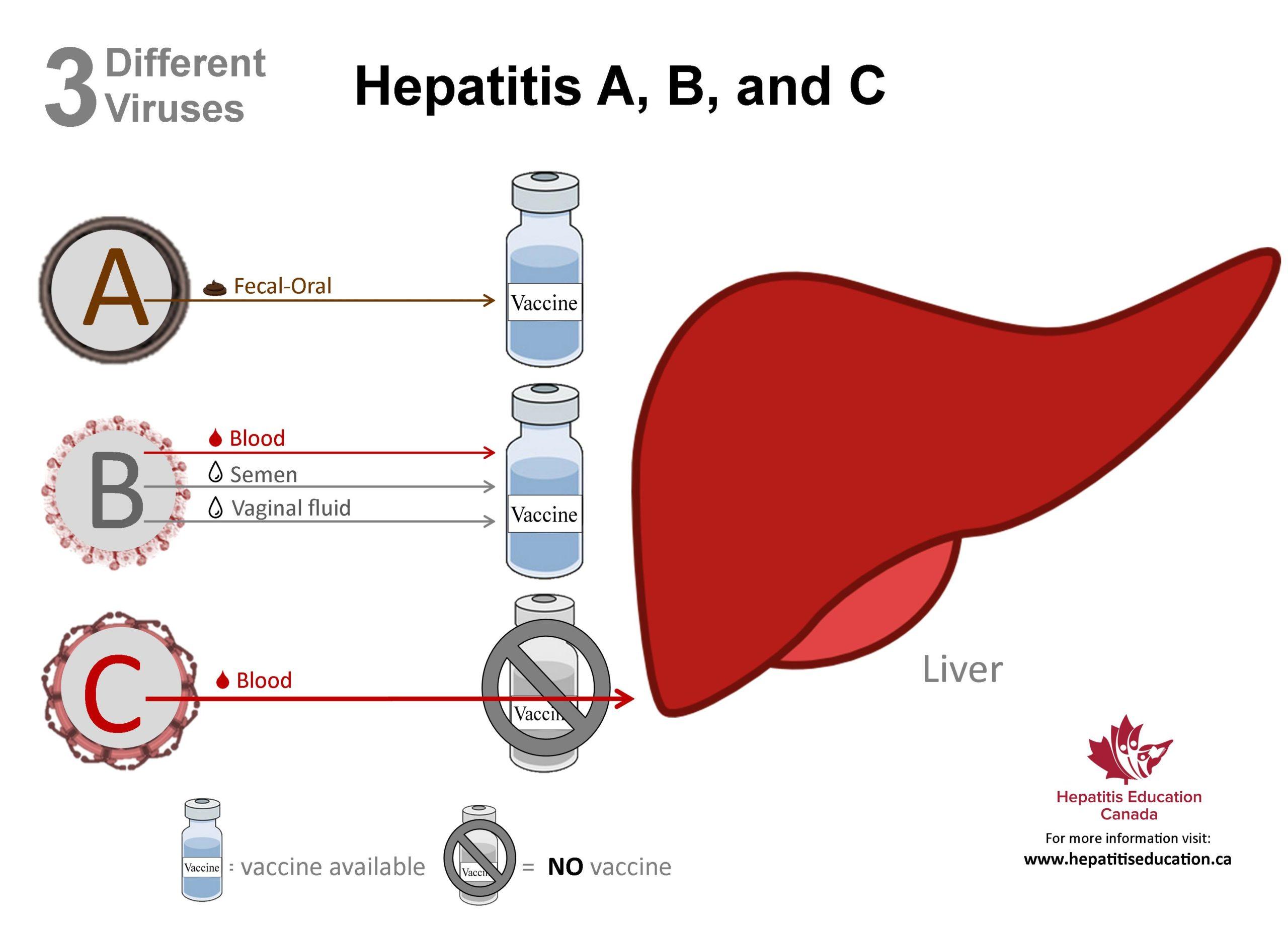 Типы гепатита
