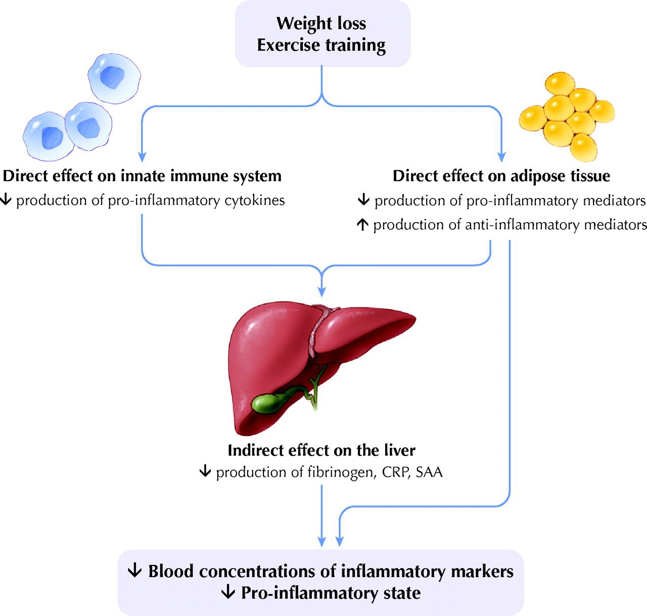 Похудение и физическая нагрузка снижают уровень воспаления и фибриногена