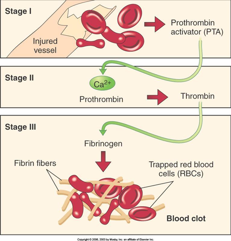 Процесс формирования сгустков (тромбов) крови при ране