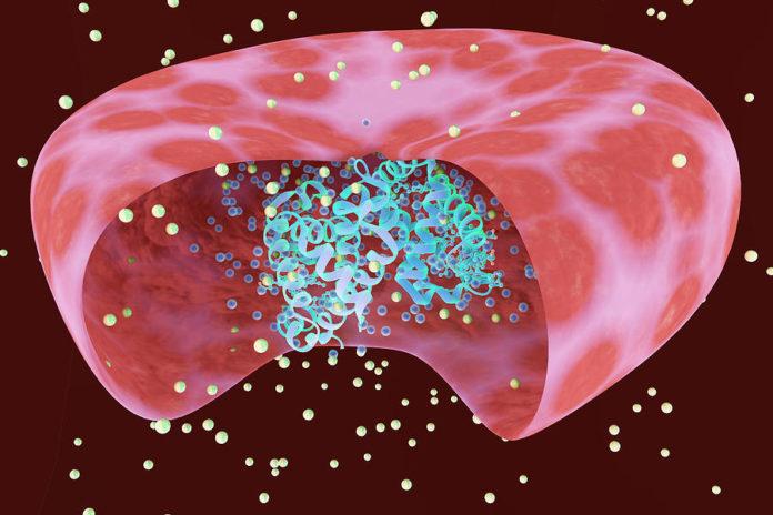 Гемоглобин и эрироцит