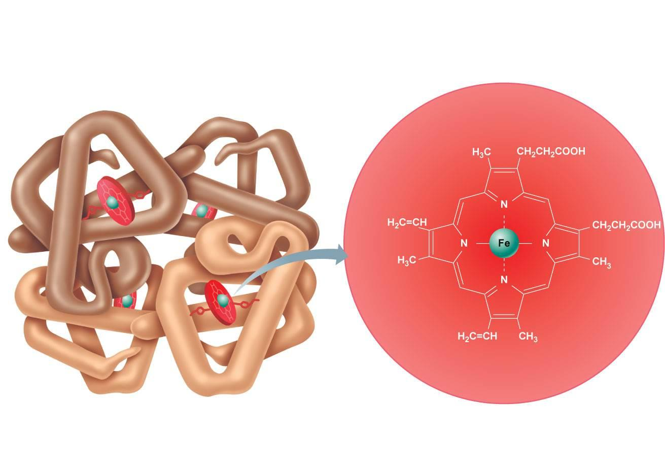 Молекула железа, связанная с гемоглобином