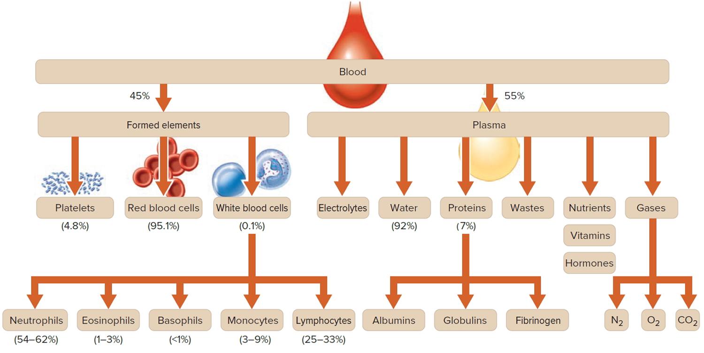 Структура состава крови
